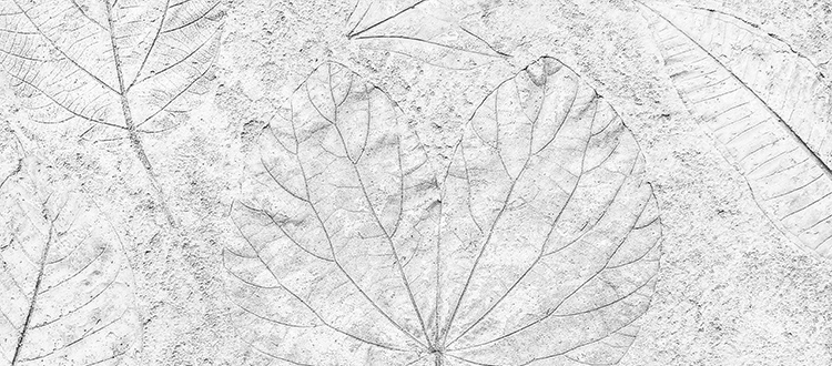 marble-with-fossilized-leaf